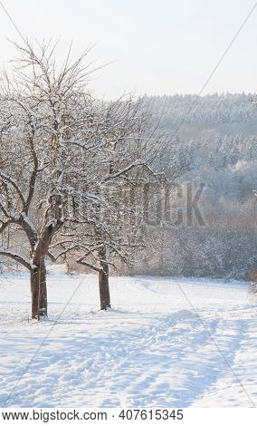 A Hilly Landscape In Swabian Alb With Leafless Apple Trees And Snow Covered Path