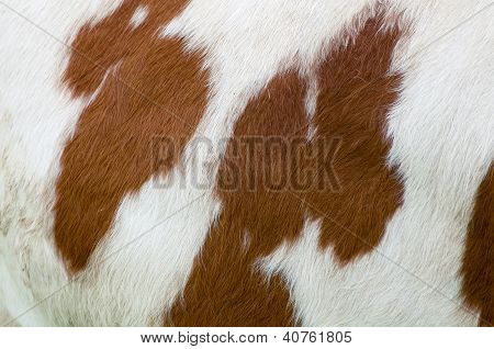Mottled Cow Texture