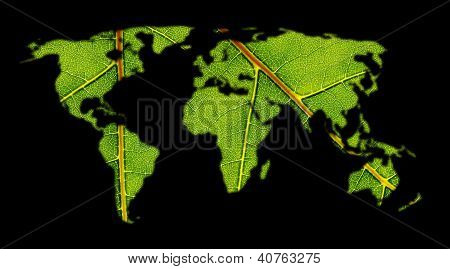 World Map With structure of a Leaf