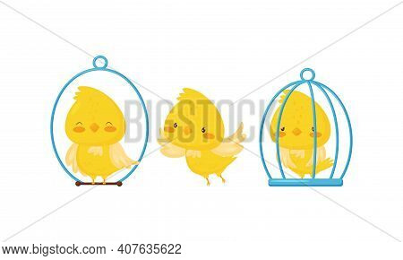 Yellow Chick Sitting In Cage And On Perch Vector Set
