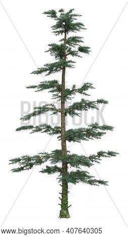 3D Rendering White Fir Tree On White