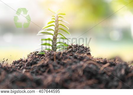 Small Tree On Soil .tree Planting For Saving Environment, Arbor Day, Card For World Earth Day. Growi