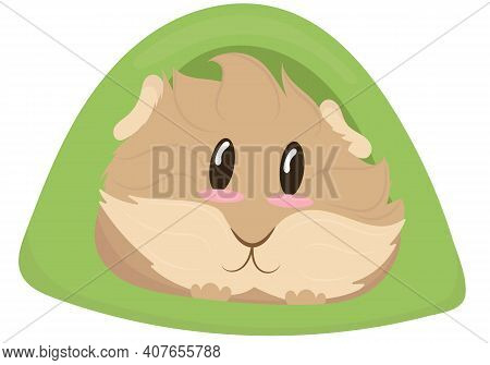 Cute Light Beige Shaggy Guinea Pig In A Green House Tent, Cute Home Rodent, Vector Illustration In F