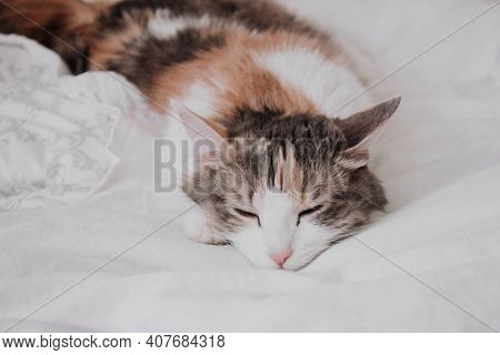 Cute White, Ginger, Gray Cat Lying In Bed. Little Kitten With Closed Eyes. Fluffy Cat Sleeping At Wh