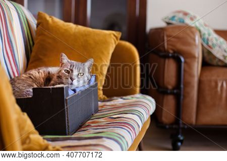 Relaxed Senior Cat In A Real Home, Looking At Camera, Resting On A Cushion In A Cardboard Box On A S
