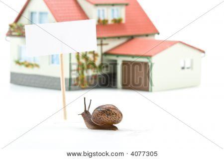 Garden Snail And Miniature House