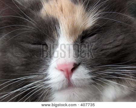 Kitty Close Up