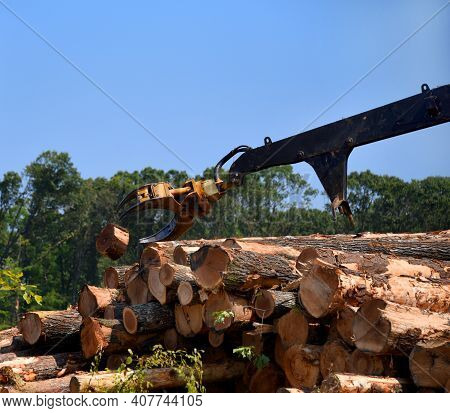 Long Arm Of Log Loader Throws A Tree Stump Out Of The Way As It Stacks Timber For Tranport.