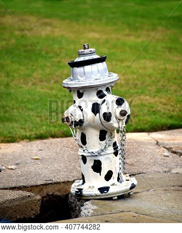 Dalmation Inspired Water Hydrant Has Spots All Over It.  It Is Black And White.  Sidewalk Is Broken