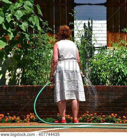 Woman Waters Her Garden With Green Water Hose.  She Struggles To Keep Plants Saturated During The He