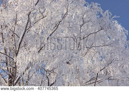 Bare Birch Branches Covered With Snow. Frost, Frozen Trees. Winter Tree Against The Blue Sky. Winter