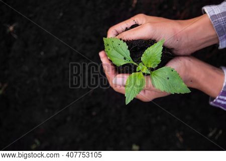 Close Up Hand Support Small Tree On Soil .tree Planting For Saving Environment, Arbor Day, Card For