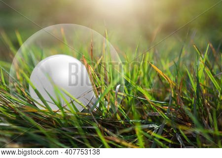 Light Bulb On Grass With Green Blured. Saving  Protect, Environment, Arbor Day, Card For World Earth