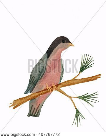 Bird Sitting On The Branch Of Pine Tree. Hand Drawn Watercolor Illustration Isolated On White Backgr