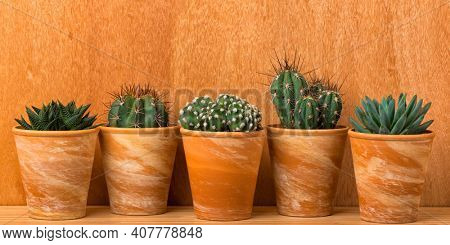 Banner with five succulent and cactus plants in terra cotta flower pots in front of wooden wall