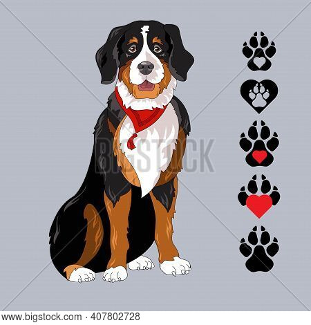 Breed Bernese Mountain Dog With Bandana. Pet Colorful Portrait. Vector.