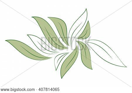 Green And White Leaves Isolated On White Background For Designs Eco Card. Vector Illustration.