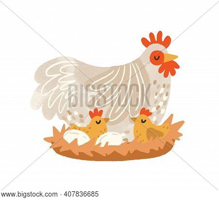 Cute Hen On Nest With Eggs And Hatched Chickens. Domestic Bird During Laying And Brooding. Colorful