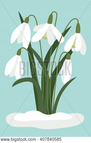 Snowdrops In The Snow. Vector, White Small Flowers. The Symbol Of The Arrival Of Spring. The First F
