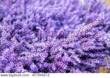 Detaiil Of Blossoming Lavender Purple Flowers, Close-up