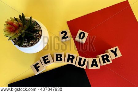 February 220 on wooden cubes .Next to it is a pot with a cactus on a multicolored background.Calendar for February .