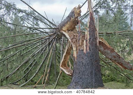 Snapped Tree