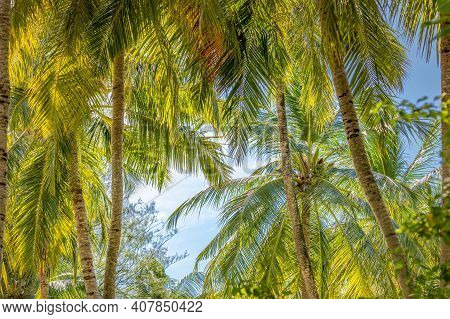 Lush Green Palm Trees Landscape. Tropical Nature Pattern, Idyllic Foliage, Relax Natural Ecology Env