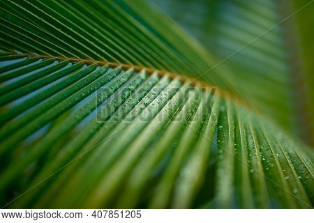 Palm Branches, Tropical Plant Background. Palm Tree Leaves, Artistic Sunlight, Relax Tropical Nature