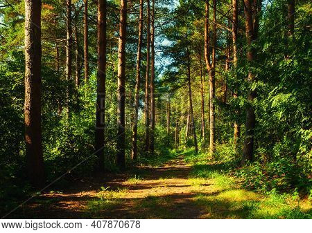 Forest landscape, spring forest trees and narrow path lit by soft sunrise light. Forest spring nature, spring forest landscape, spring forest background