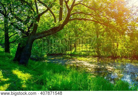 Summer forest landscape, forest trees on the bank of the small forest river. Forest summer nature in sunny day, diffusion filter applied, forest summer nature, summer forest landscape, landscape scene, landscape background