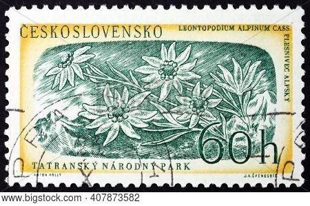 Czechoslovakia - Circa 1957: A Stamp Printed In Czechoslovakia Shows Edelweiss (leontopodium Nivale)