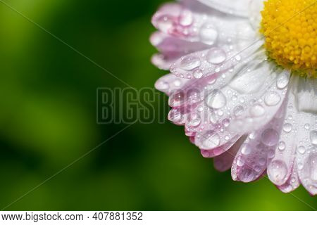 Part Of Daisy Flower In The Corner With Empty Copy Space. Macro Marguerite With Yellow Core On Blurr