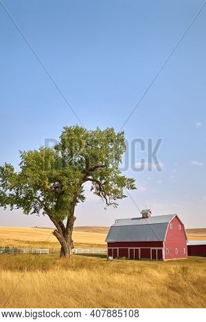 Red Barn Tree And Sunshine Vertical. A Bright Red Barn On A Hill In The Sunshine. Washington State,