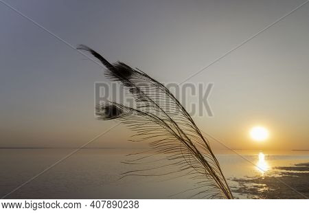 Silhouette Of A Peacock Feather On The Background Of The Setting Sun On A Pink Lake Very Beautiful F