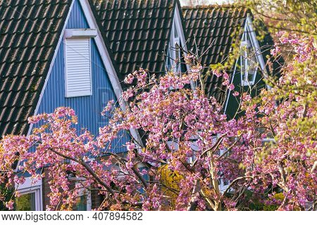 Spring Street Of European Town. Sunny Domestic Springtime, Simplicity Outdoor Background. Roofs Of H