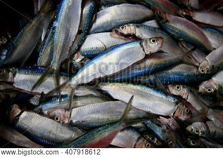 Fish Trade In The Port Of Sardines