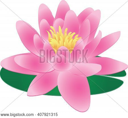 Single Pink Lotus Water Lily On Green Lily Pad