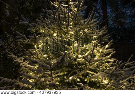 The Photo Shows A Lighted Fir Tree In Winter With Snow
