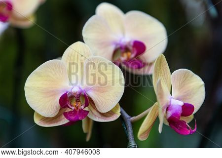 Phalaenopsis Orchid In Spring, Spring Background. Spring Composition, Spring Card, Colorful Spring B