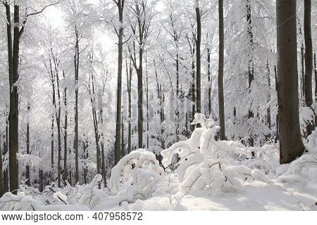 Winter woods forest sunrise morning Nature landscape Nature background landscape Nature snow Nature background landscape Nature background landscape Nature landscape Nature background trees Nature landscape Nature background landscape Nature landscape.