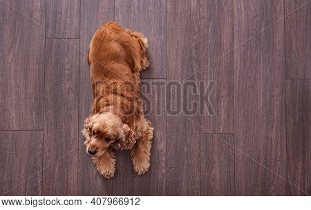 Cute Cocker Spaniel Dog Lying On Warm Floor, Top View With Space For Text. Heating System