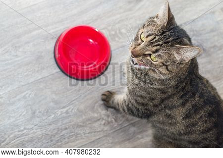 Hungry Cat Stands Near An Empty Food Bowl In The Kitchen