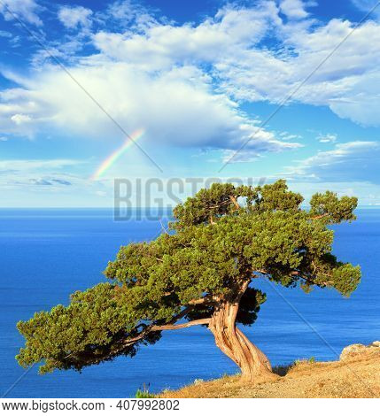 Rainbow In Blue Cloudy Sky Above Summer Juniper Tree On Rock And Sea (
