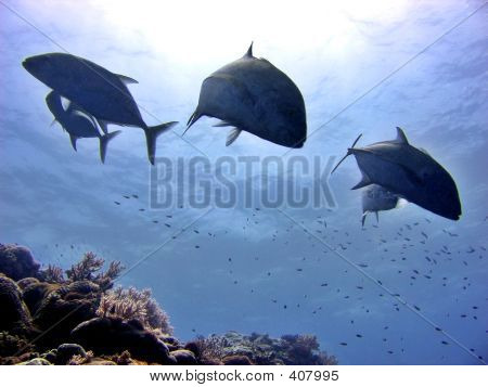 Ocean Silhoutte