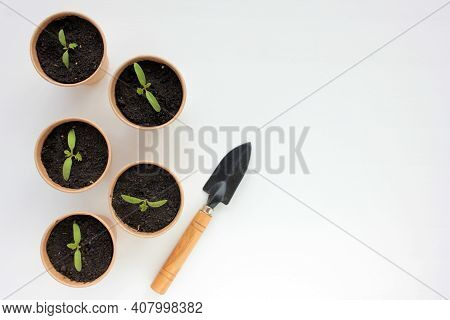 Cherry Tomato Plant Seedling In Brown Organic Pots And Gardening Tool On The White Background. Growi