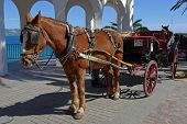 Horse drawn carriage along the Balcony of Europe (Balcon de Europa) Nerja Costa del Sol Malaga Province Andalucia Spain Western Europe. poster