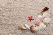 Frame of sea shells and starfish on sand warm light poster
