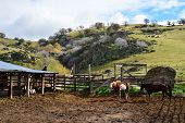 Two horses standing in a corral on a ranch in California's Sierra Nevada Range poster