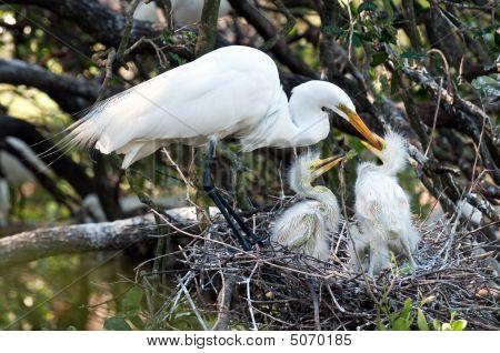 Feeding The Chicks