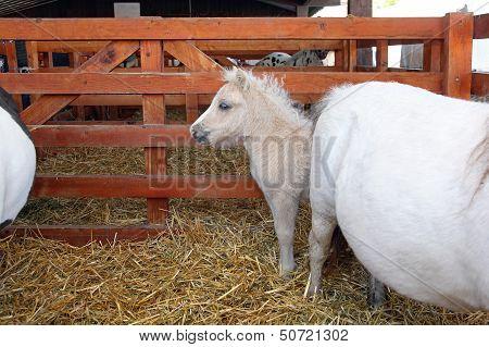 Pony Baby